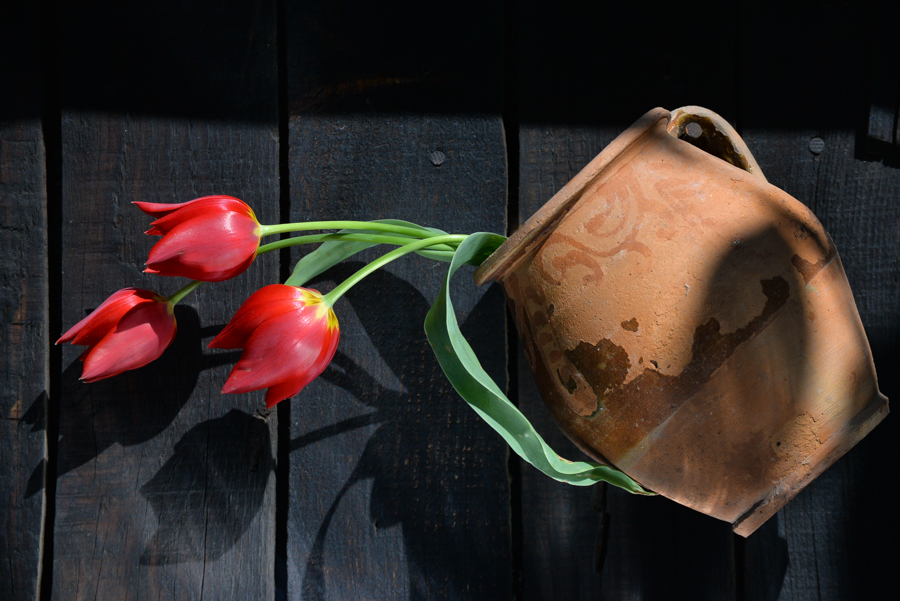 red_tulips_pot-1