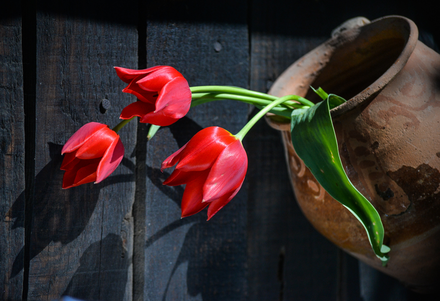 red_tulips_pot-3